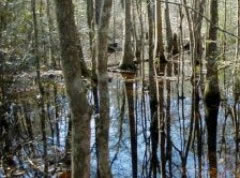 Big Thicket Photo