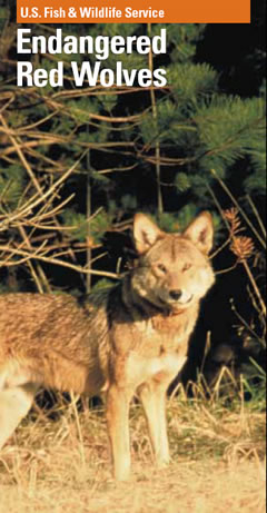 Red Wolf PDF Cover Photo