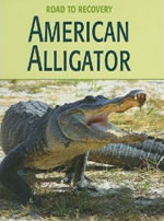 American Alligator Book