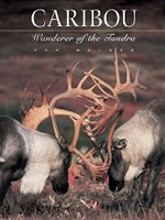 Caribou: Wanderer of the Tundra A good Photo Book