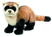 Black Footed Ferret Plush 20in