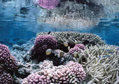 Coral Reef at Palmyra Atoll