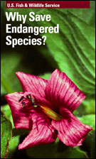 Why Save Endangered Species Ebook